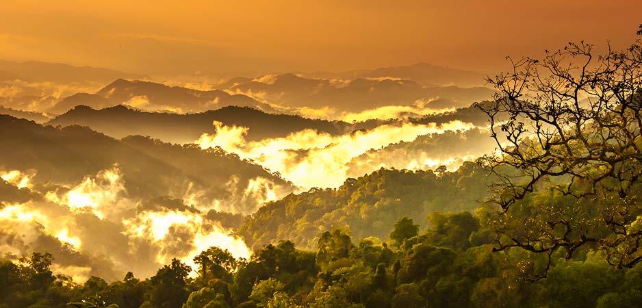 Het vernietigen van de Amazone is de winst die het genereert niet waard