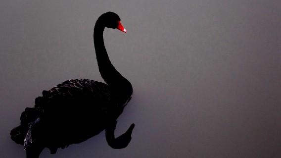 Is het Corona-virus een zwarte zwaan?
