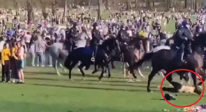 Agenten te paard stormen op halfnaakte vrouw af: Als dit normaal is, dan ben ik maar abnormaal