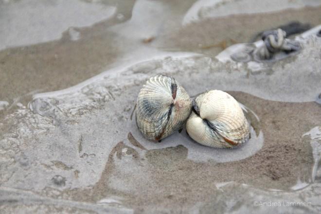 Muscheln, Wattenmeer, Schadstoffe, Klärwerk, Muschelessen