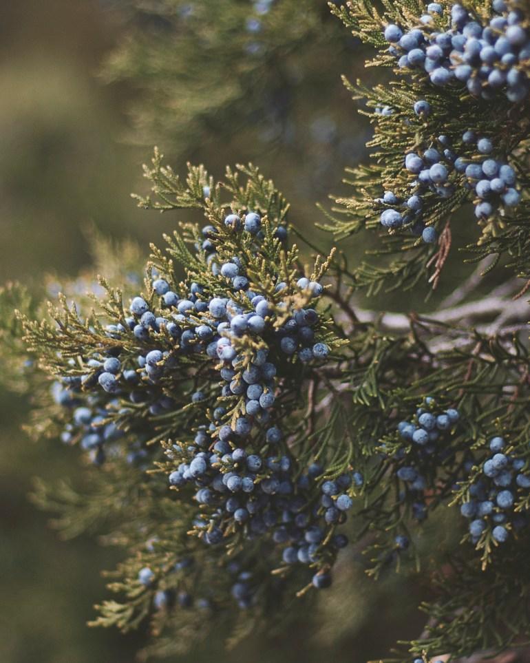 Berries 4x5