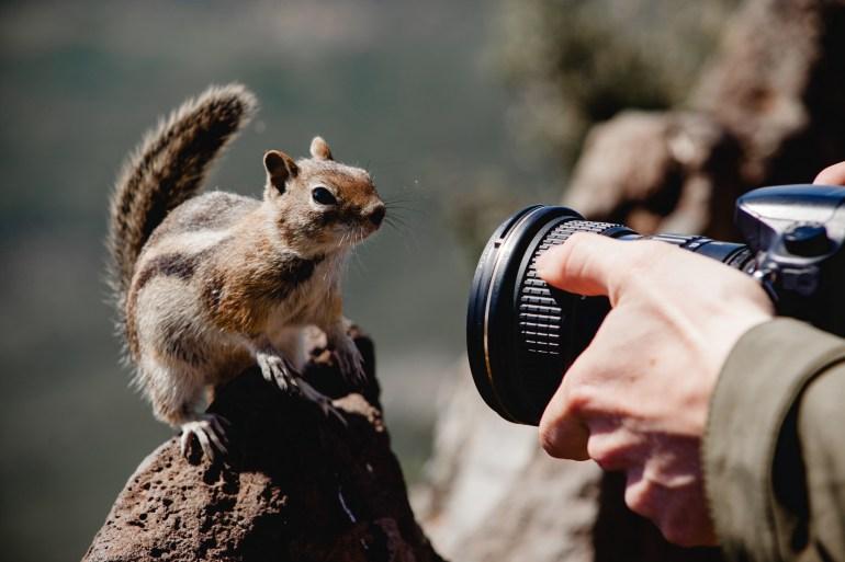 Chipmunk with camera