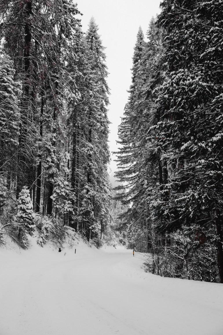 Sequoias-8
