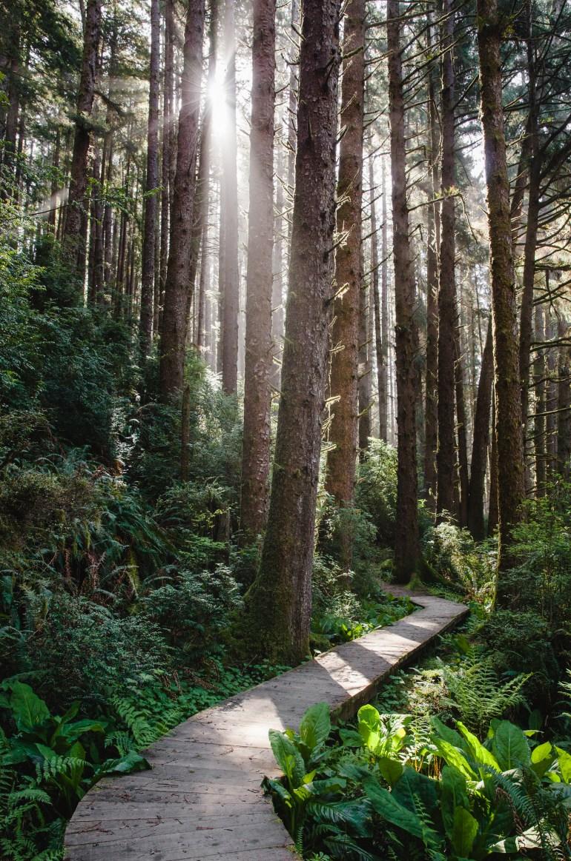 Redwoods-SF-58
