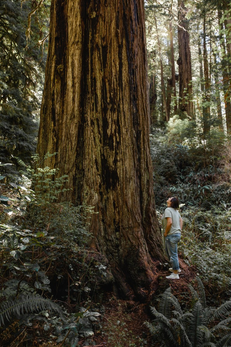 Redwoods-SF-73