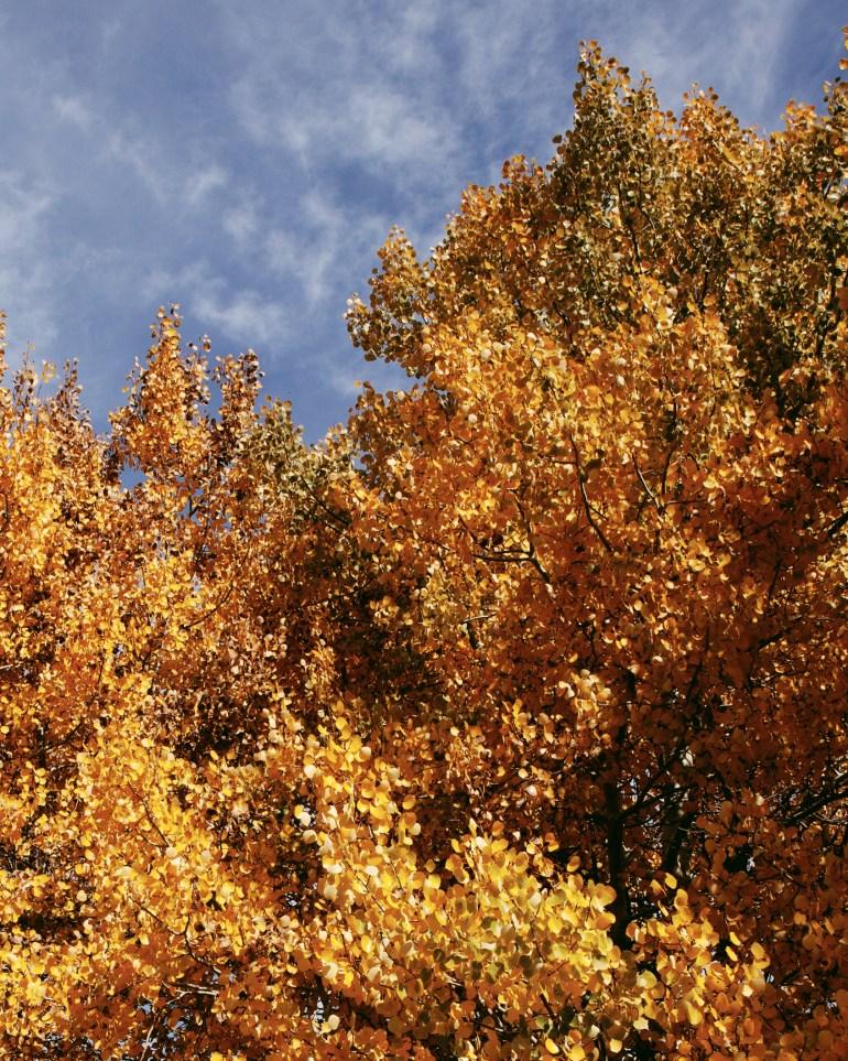 Lake Tahoe Trees