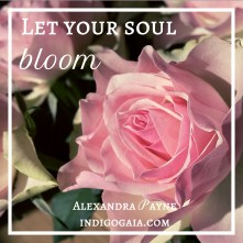 let-your-soul-bloom