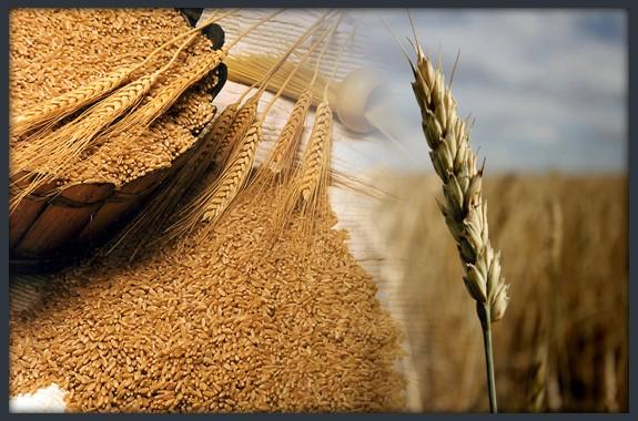 salvado-de-trigo