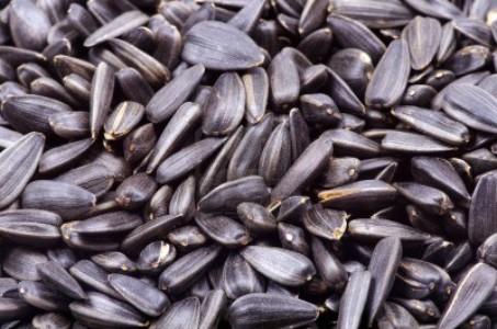 semillas girasol