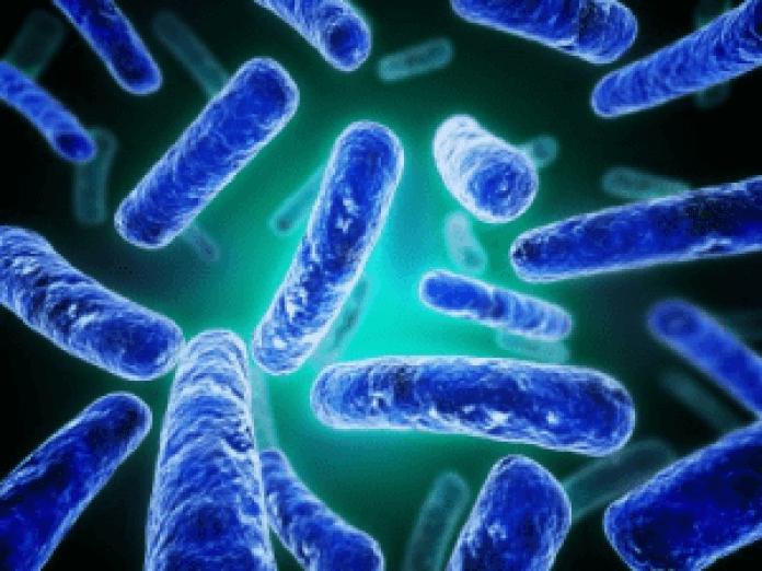 Bifidobacterium-Longum-300x225