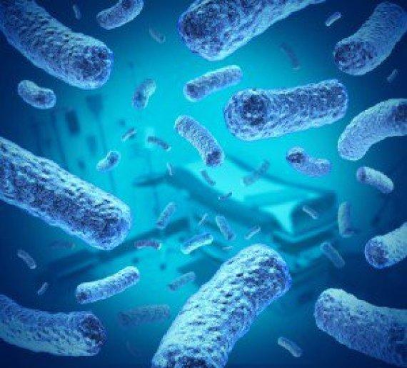 lactobacillus-helveticus-probiotic-300x271
