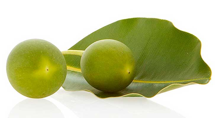 tamanu_oil_benefits