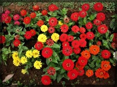 flower-10b