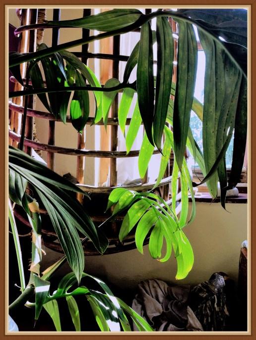 plant-3b