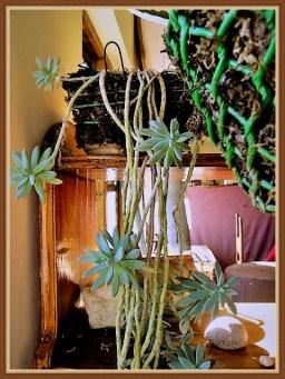 succulent-10b
