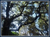 tree-13b