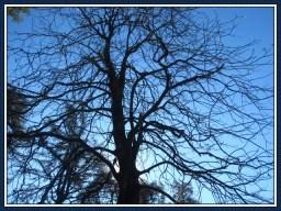 tree-14b
