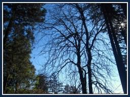 tree-15b
