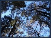 tree-9b