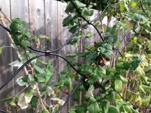 raspberry trellis detail, handmade s - Beaverton 9' W x 5' H