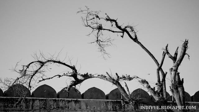 Intialainen puunranko ja kyyhkyset