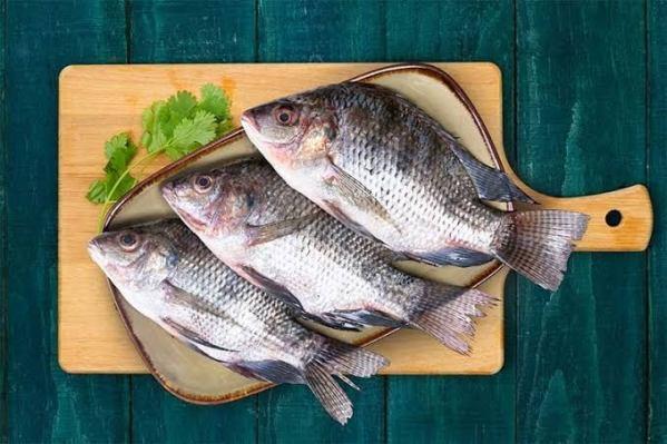 Tilapia river fish Indore