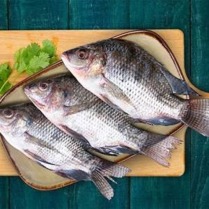 Tilapia river fish Indore