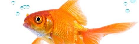 Gli acquari e la domotica personale