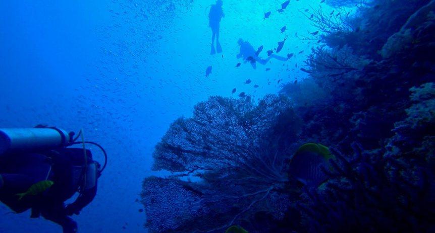 Misool Diving
