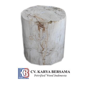 Indonesia Petrified Wood 6
