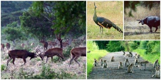 3-2-peacock-via-farisangger,-dimas_arya1919,-akbarftg,-Backpacker-Gembel