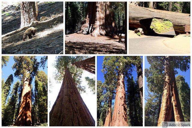 West Coast: Sequoia NP