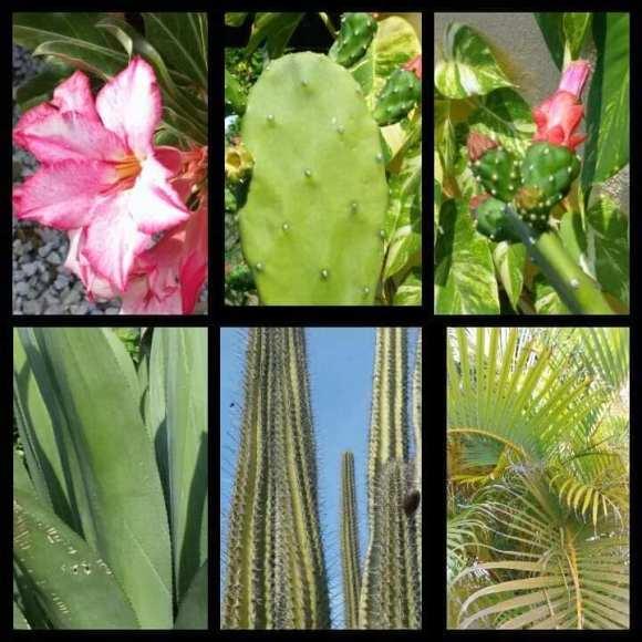 isola di Curacao la vegetazione