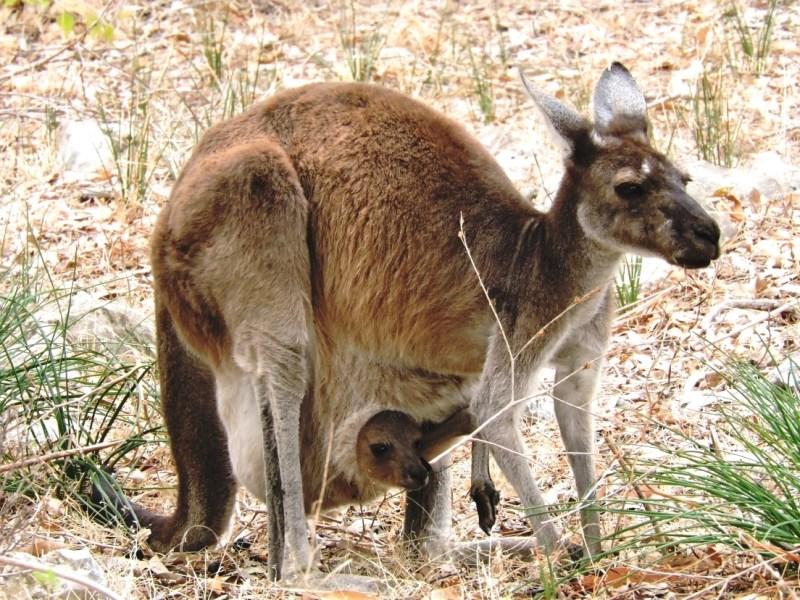Australia viaggi