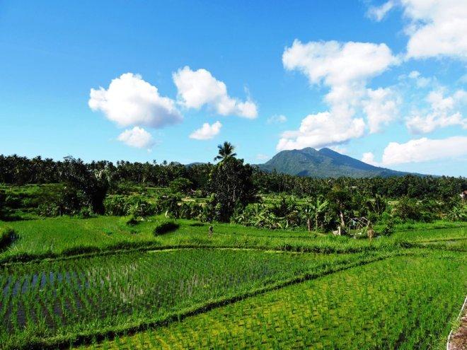 Bali le risaie più belle sidemen