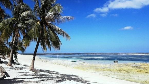 Indonesia isola di Rote  palma