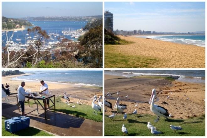 Australia tra città e natura: Sydney baie del nord