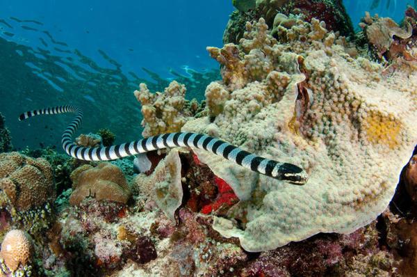 pericoli serpente di mare
