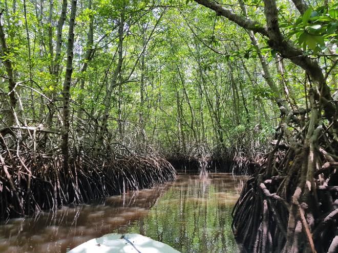 mangrove-forest-nusa-lembongan-spuntidiviaggio