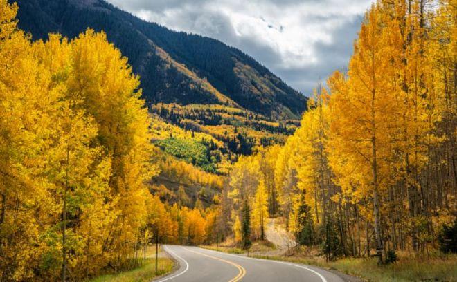 Foliage-Colorado
