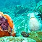 snorkel gili meno