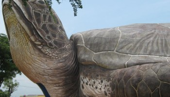 Giant Turtle, Kartini Beach Jepara