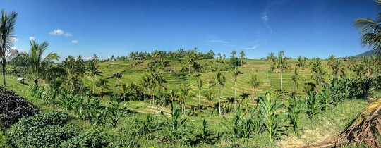 Jatiluwih rijstterrassen - Bali, Indonesië