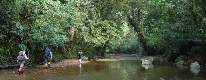 Jungle trekking – Serimbu, West-Kalimantan (Borneo). Indonesië