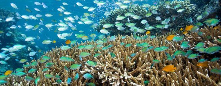 Snorkelen of duiken rond Menjangan Island