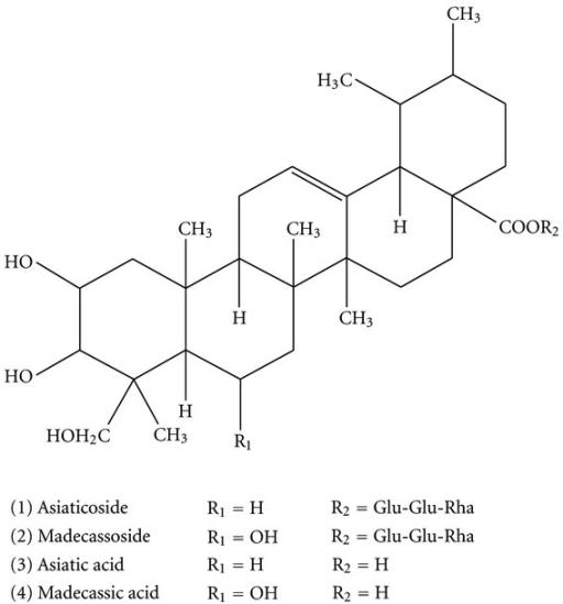Centella Asiatica Extracts