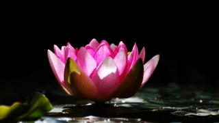 は_蓮の花3_追悼