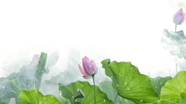 は_蓮の花_追悼2