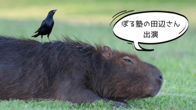 ぼ_ぼる塾_田辺さんのコナン愛
