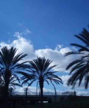 shadows of trees in anaheim where mold inspection and mold testing services are available
